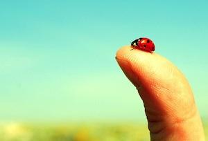 A ladybug on a thumb.