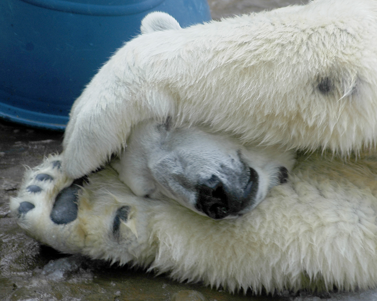 polar-bear-trainer